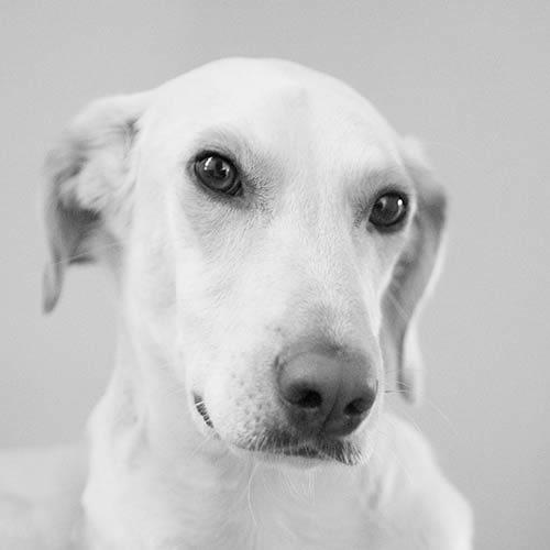 former-greek-straydog
