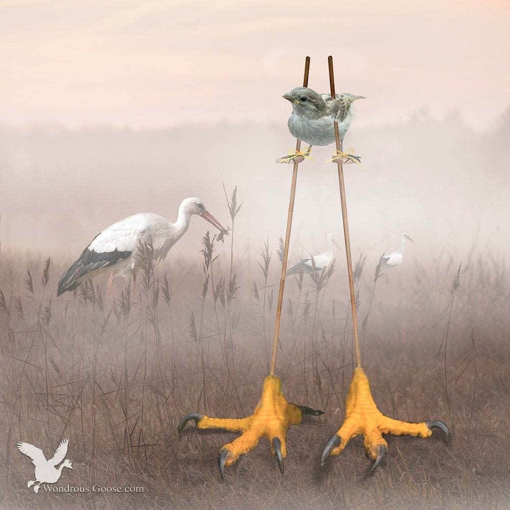 The Biggest bird-Limited Prints