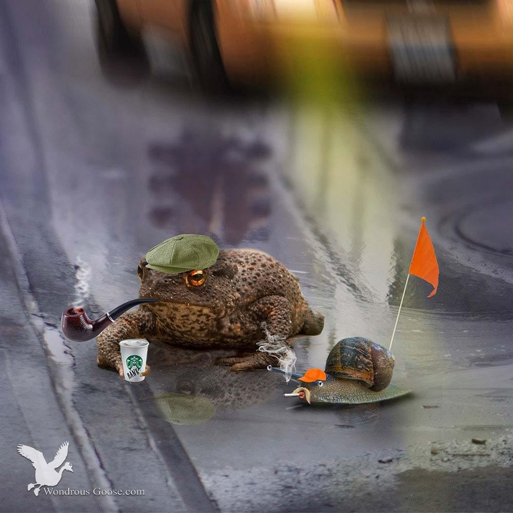 Rush hour-wondrous goose news